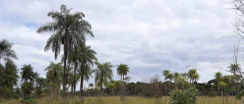Singular Paraguay